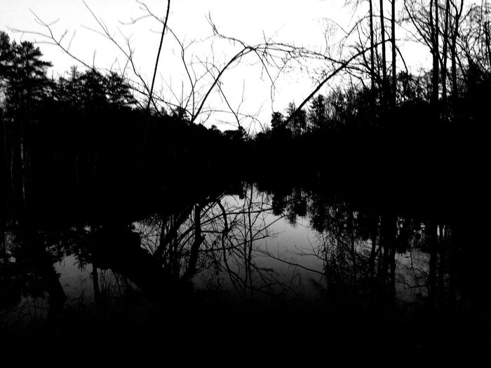 Trees Lake Landscapes With WhiteWall The Photojournalist - 2016 EyeEm Awards The Portraitist - 2016 EyeEm Awards Hanging Out Right Lane Must Turn Right Hi! Relaxing Taking Photos Enjoying Life Outdoor Photography Outside Photography Simple Photography Simplicity Tree Black & White Blackandwhite Black And White Photography Trees And Sky Photography Outdoor Outdoors Outside Love