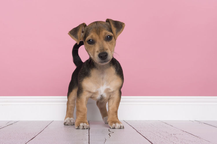 Portrait of puppy sitting against wall