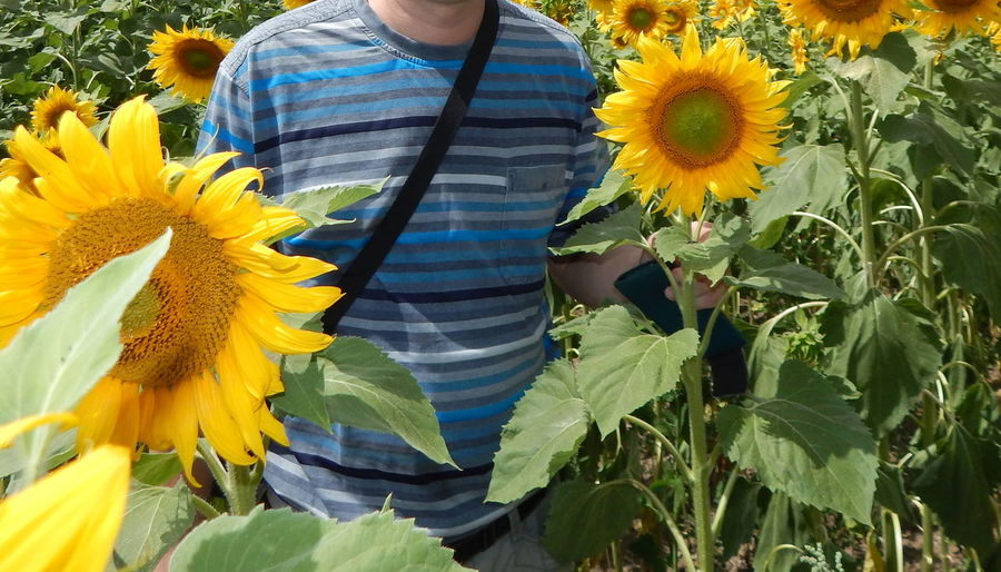 Man standing amidst sunflowers in farm
