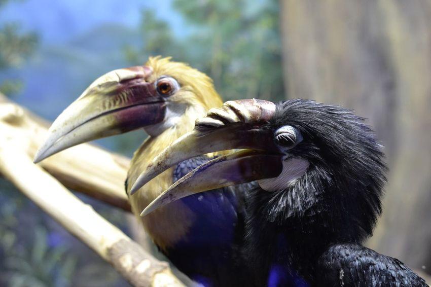 Bird Beak Animal Wildlife Animals In The Wild Outdoors Pelican No People Day