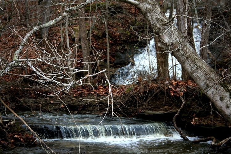 Waterfall, Spillway, Crooked Creek Lake, Indiana Water Tree Forest Nature No People Motion Flowing Water Land Plant Long Exposure Day Blurred Motion River Bare Tree Beauty In Nature Branch Tree Trunk Flowing Outdoors WoodLand Stream - Flowing Water Spillway Waterfall Waterfalls