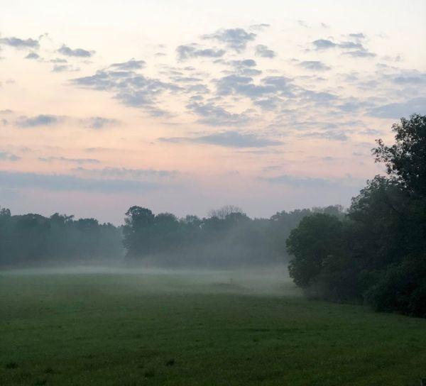 Morning Fog Plant Cloud - Sky Tranquil Scene Rural Scene Agriculture