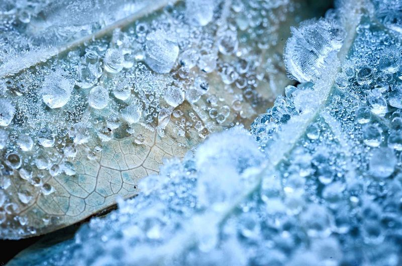 Close-up of frozen water drops on leaves