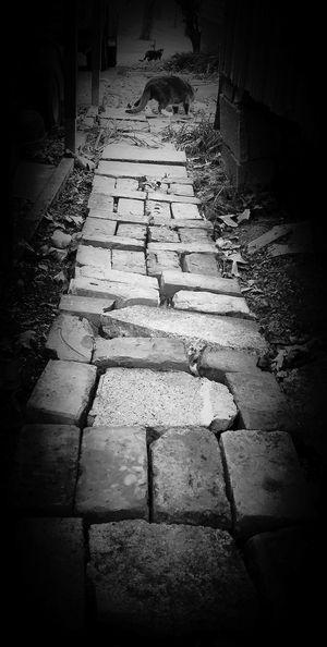 A rough path is still a path. IPhoneography Streamzoofamily Blackandwhite Fortheloveofblackandwhite Light And Shadow Cats EyeEmTennessee RuralTreasures  RuralTennessee