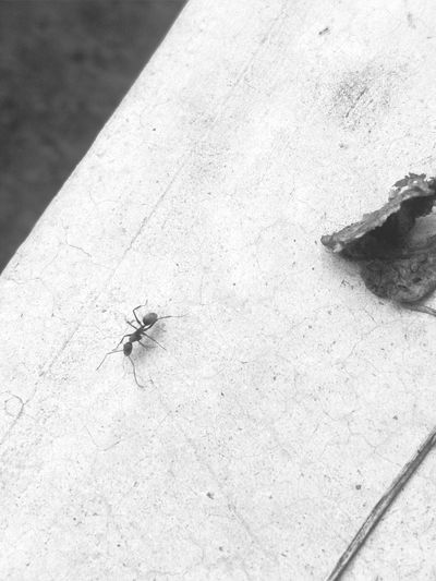 Blackandwhite Nature EyeEm EyeEm Gallery EyeEm Selects Insect High Angle View Close-up Ant Tiny