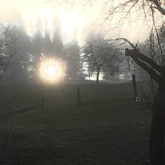 Dezember Dezember 2016 Sun Unbearbeitet Tree Trees Nature Beauty In Nature Beautiful Schweiz Suisse  Sonntag