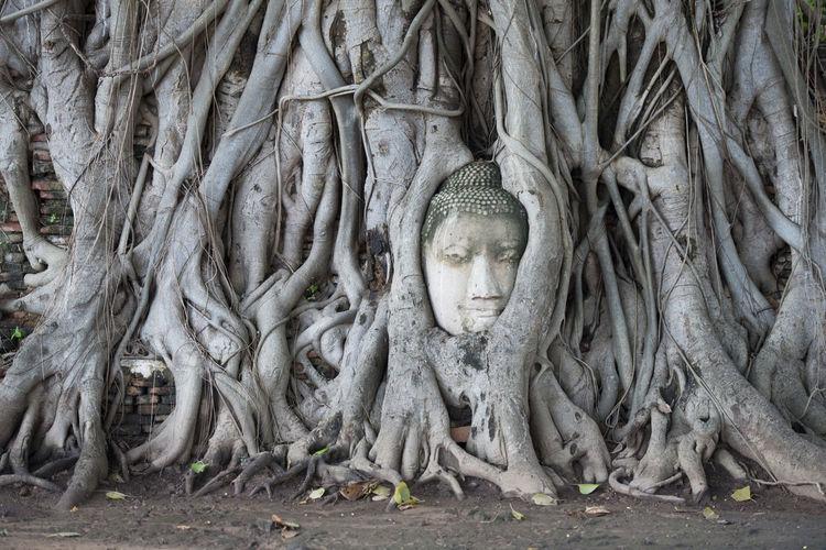 Buddha on banyan tree