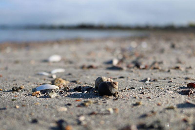 Seashells on