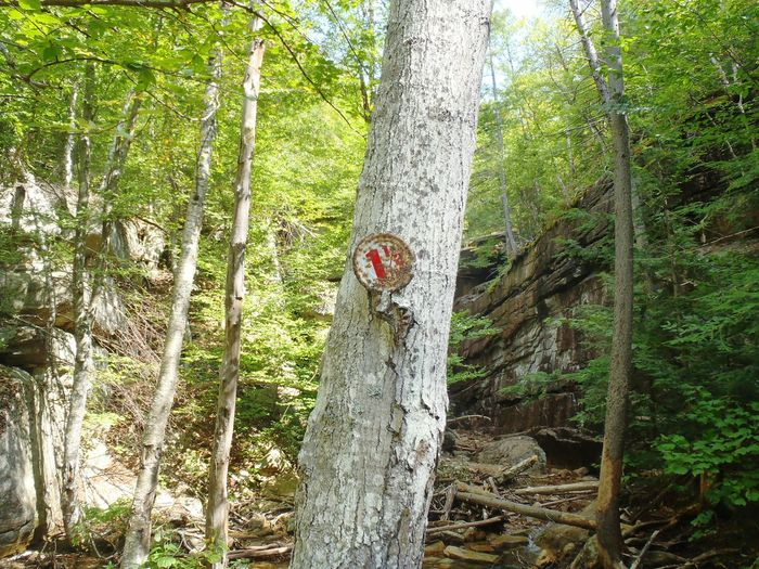 Man Vs Nature Human Vs Nature 1 1/2 Mountain Forest Forest Trees Hiking Into The Wild Nature VS Man