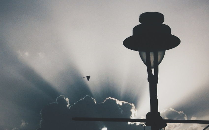 Things I Like Check This Out Sun ☀ Sun Hiding Behind The Cloudes☀️💞 Tranquil Scene Perfect Moment Bird In Flight Lamp Post Urban Spring Fever Photography In Motion Sunrays_penetrating_clouds Amazing Nature