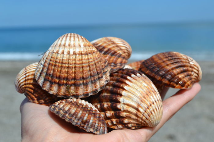 Holiday Mediterranean  Animal Shell Animals In The Wild Beach Beachphotography Beauty In Nature Close-up Day Focus On Foreground Holding Human Body Part Human Finger Human Hand Leisure Activity Lifestyles Mussels Nature One Animal One Person Outdoors Real People Sea Sea Life Seashell Summer Unrecognizable Person Water Women