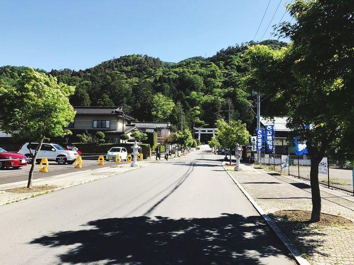 Tree Road Day