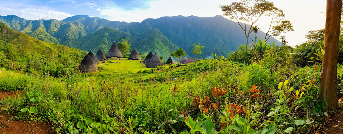 Beautiful Landscape of Wae Rebo Manggaraian village, with mountain scenery. INDONESIA Mountain, Beauty In Nature Day Field Grass Green Color Growth Landscape Mountain Mountain Range Nature No People Outdoors Plant Scenics Sky Tranquil Scene Tranquility Tree Waerebo Waerebovillage EyeEmNewHere