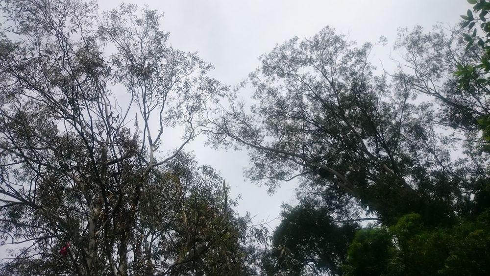 Campinas, São Paulo, Brasil Semfiltro XperiaZ1 Natureza 🐦🌳 Parquedasaguas