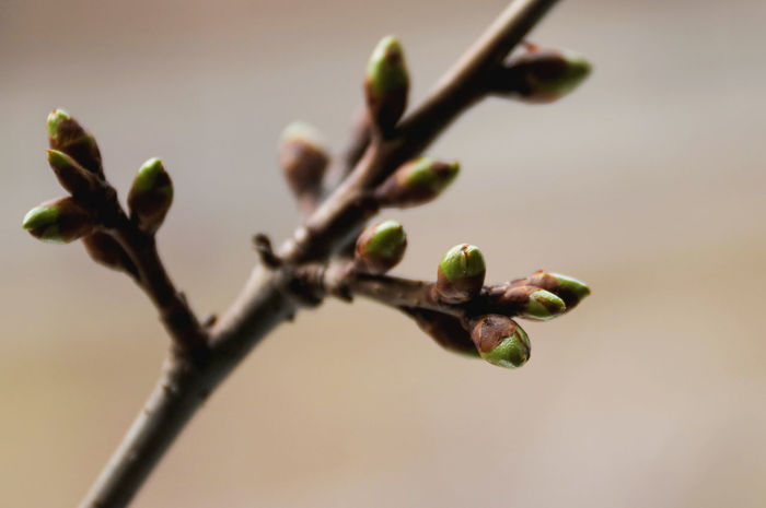Beauty In Nature Beginnings Branch Bud Burgeon Close-up Day Focus On Foreground Fragility Growth Nature New Life No People Outdoors Plant Sprig Sprigs Spring Springtime