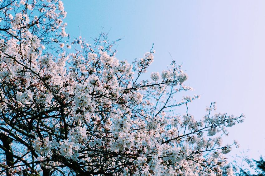 EyeEm Tokyo MeetUp 12 EyeEm Nature Lover Urban Spring Fever VSCO Vscocam Spring Sky Cherry Blossoms Sakura2016 Sakura