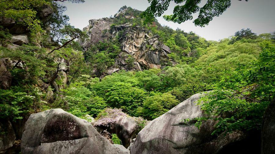 昇仙峡山 神秘 昇仙峡 日本 岩 花崗岩 山梨県 Landscape Mountain Japan Green