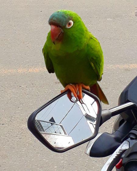 Brasil Coisanossa Capturing Freedom Bird