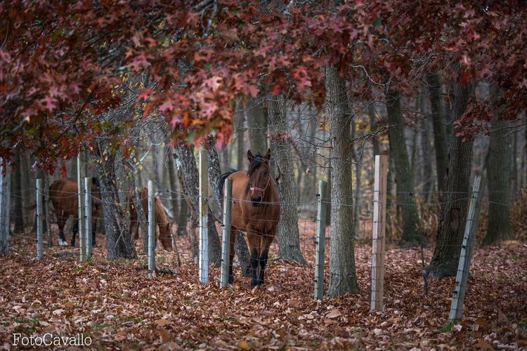 Into the Woods. Horses Horse Equine Animals Animal Photography Animal_collection EyeEm Nature Lover Nature_collection Nikon Nikon D750 EyeEm New Jersey New Jersey