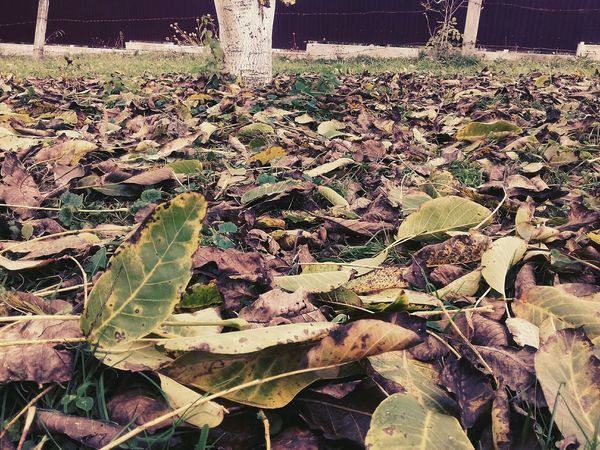 Day Leaf Growth No People Nature Outdoors Plant Close-up Beauty In Nature Freshness