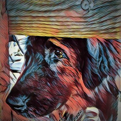 One Animal Close-up Animal Nose Dogs Life Dogs Of Summer Abstractions In Color Phonecamera abstract Old Dog Old Dogs 🌾 Dog Phone Editing