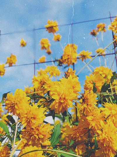 💛 Yellow Plant