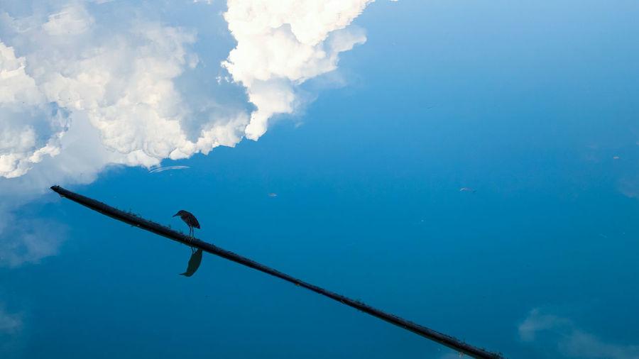 Bird Lake Sky