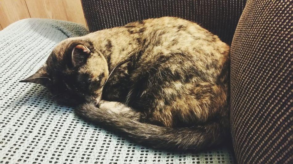 Sleepy Jane. Night Night, Sleep Tight Sleepy Kitty Domesticated Pets House Cat Our Cat Sleeping Sleepy Animals Sleeping Animals Cats Cute Cat Black Cat Pretty Cat