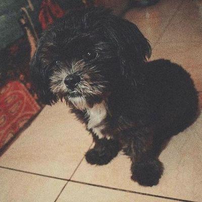 Puppy! THARAWSHOT