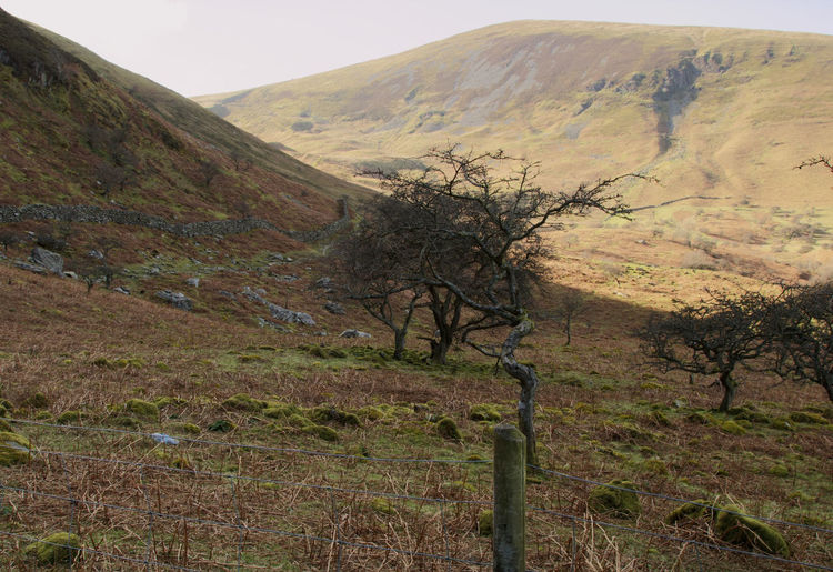 Wales Mountains Welsh Countryside Tree Rural Scene Landscape Grass Physical Geography