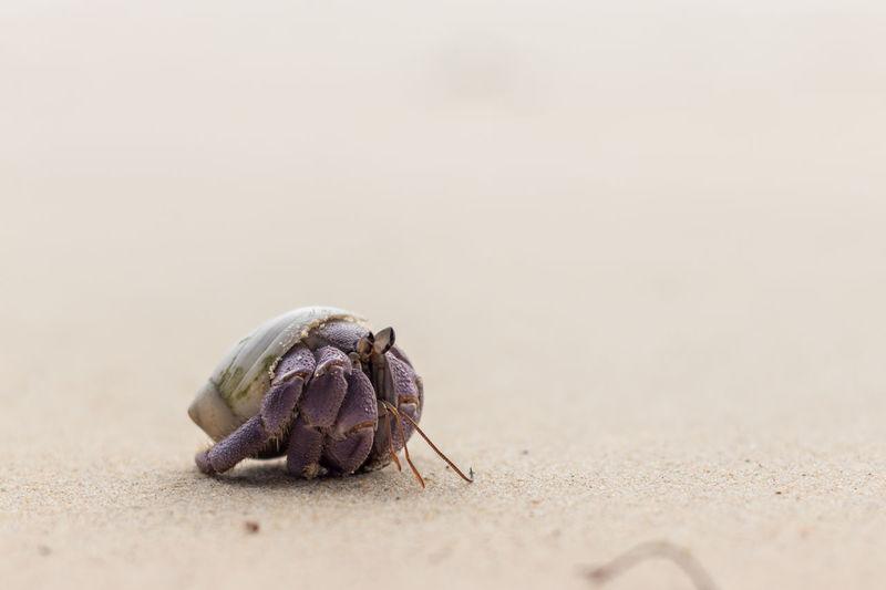 Close-up of animal at beach