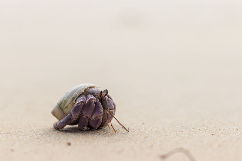 sea Sea Life Beach Sand Hermit Crab Close-up Animal Themes
