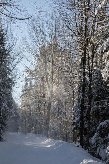 Trees Wind Path