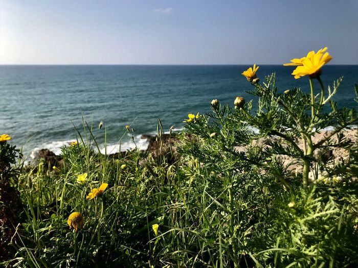 Flower Beach Sea Sea And Sky Green Horizon Over Water Growth Beauty In Nature Yellow Plant Tranquility Nature Outdoors Nexttotheocean Nexttothesea Adropeintheocean