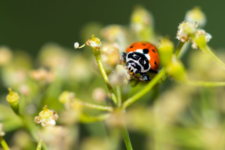 Ladybug 🐞🐞