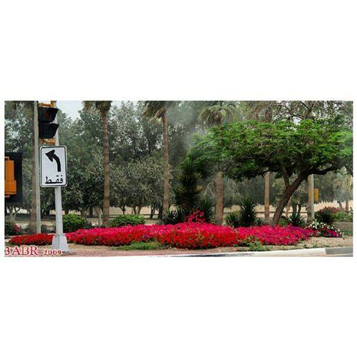 كرنيش الفناتير الجبيل الصناعية المملكة العربية السعودية كانون 50d Corniche Fanateer Jubail Saudi Arabia Canon 50D x3abrr rose
