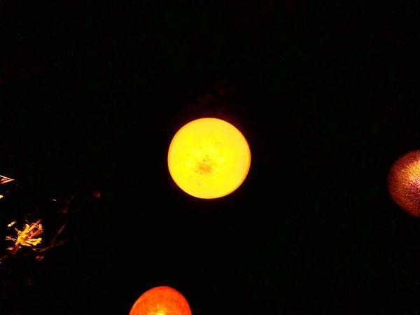 Nature Ligth Lampions Night