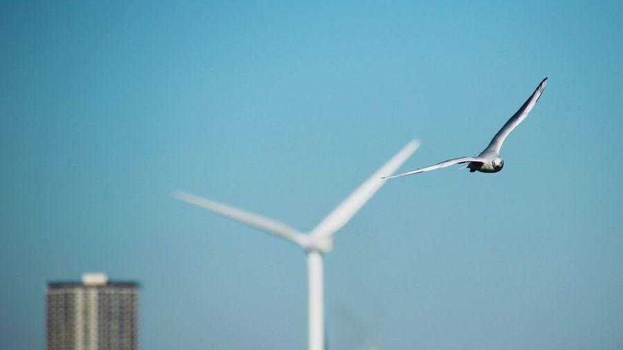 Seagull flying against wind turbine