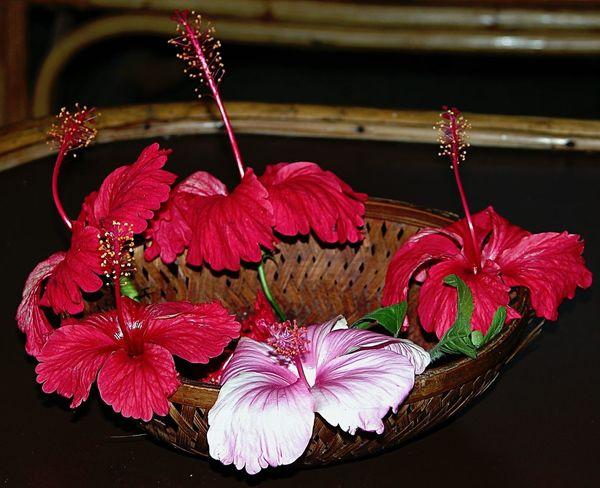 Flowers From My Garden Hibiscus 🌺 EyeEm Flower Flower_Collection