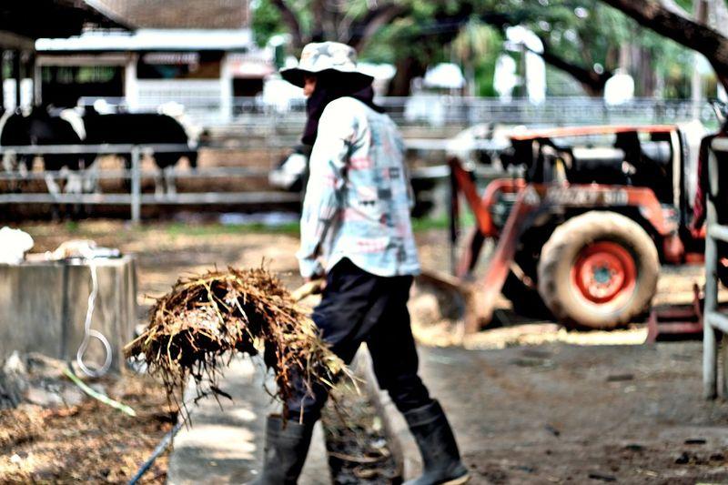Thailand EyeEmNewHere Eye4photography  Eye4photography  EyeEm Gallery People Photography OpenEdit HDR Street Photography Hello World Cow Farm