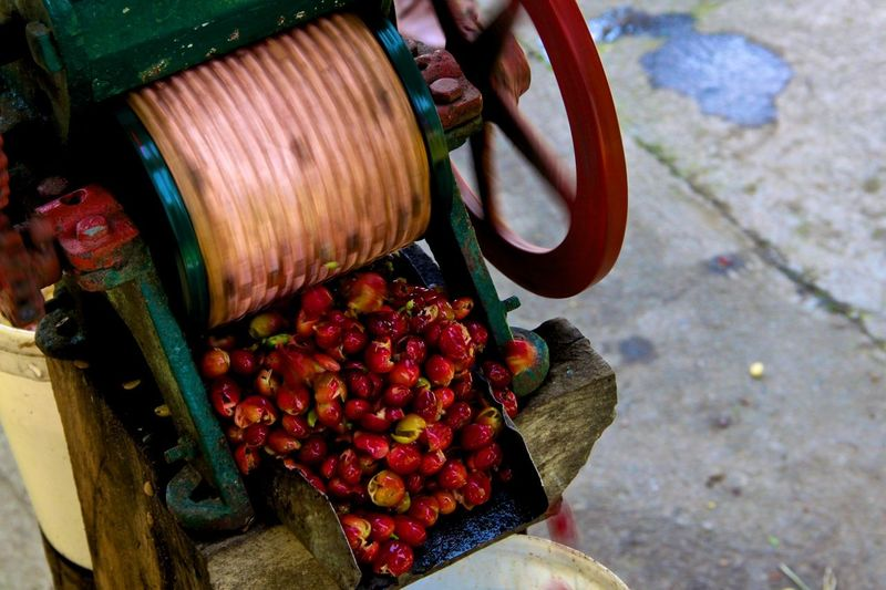 Coffee beans Beans Coffee Crop  Fruit Harvest Machine Manual Movement Picked Red Spinning