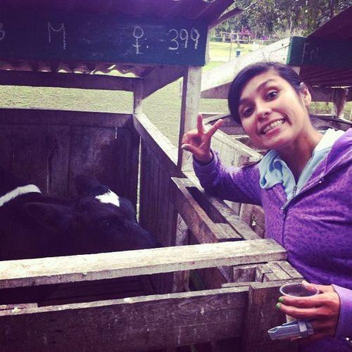Me con los becerros Loveranimal Vet  Animal igersperu lurin instagramperu