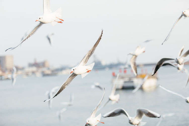 A day trip! Be. Ready. Animal Themes Animal Wildlife Animals In The Wild Bird Day Flock Of Birds Flying Focus On Foreground Large Group Of Animals Mid-air Nature No People Outdoors Pelican Sea Seagull Sky Spread Wings Water Waterfront