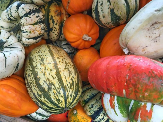 Fall Colors Squash Time Vibrant Color Fall Beauty Food And Drink Food Freshness Healthy Eating Vegetable For Sale Market Large Group Of Objects Variation Retail  Choice Abundance Stack Still Life High Angle View Market Stall Close-up Collection