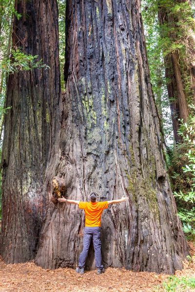 If you feel suddenly very small Redwood National Park California RedwoodsNationalPark Redwood Redwood Trees Majestic Nature Majestic Feeling Small Redwoods Human Arm Limb Arms Raised One Man Only Tree One Person Only Men Tree Trunk Adult Human Body Part Adults Only Mid Adult Forest Men People Standing Rear View Outdoors An Eye For Travel California Dreamin Go Higher Visual Creativity