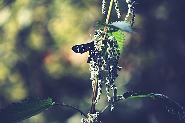 EyeEm Selects Close-up Outdoors No People Day Nature Plant Butterfly EyeEm Nature Lover EyeEm Best Shots Nikon