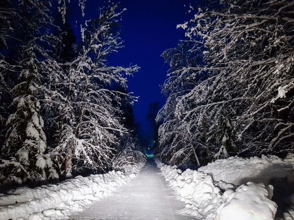 Snow Winter Cold Temperature Outdoors Night Nature No People Tree Beauty In Nature Sky UnderSea