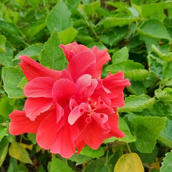 Макао Makao Makau Flowers flower nature travelling travel Asia red green