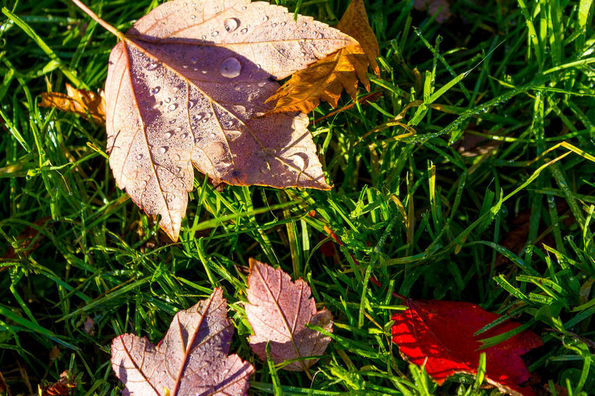 Leaf Autumn Change Nature Outdoors Day No People Close-up Grass Beauty In Nature Fragility