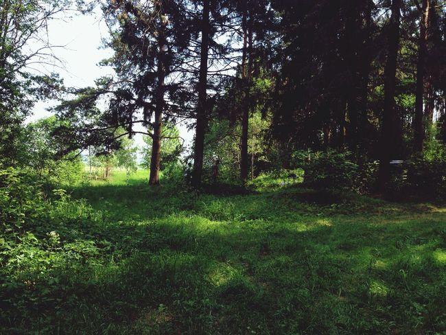 В лесу ?????☀️ First Eyeem Photo